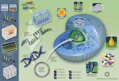 Геном из пробирки обещает миру блага и бедствия