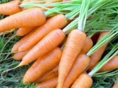 Секреты превосходной моркови