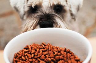 Как выбрать качественный сухой корм для собак